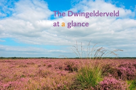 Dwingelderveld at a glance